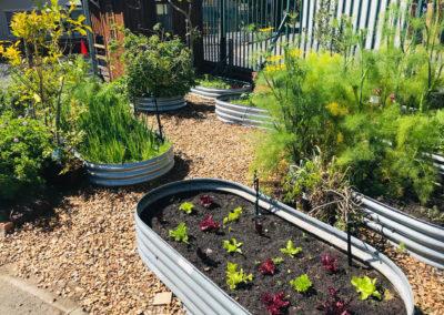The Grove veggie garden