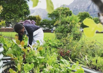 Picking fresh produce from The Grove veggie garden